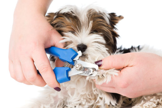 Why You Should Consider Professional Dog Grooming