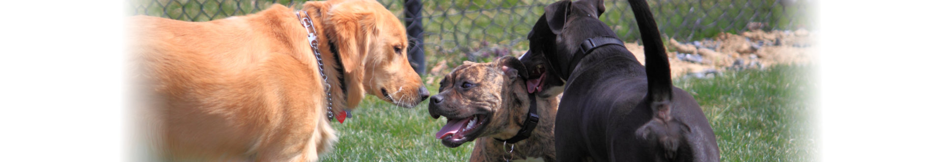 three unleashed dogs playing in dog park for stress relieving, exercise, and social