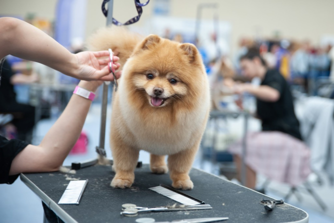 Tips for Grooming Your Dogs at Home