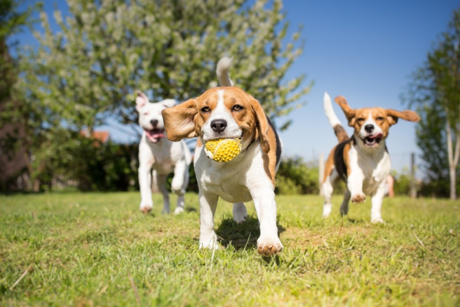 Fun Activities in a Dog Daycare Center